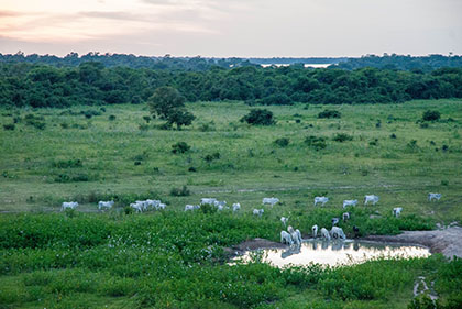 pantanal einblick_2075