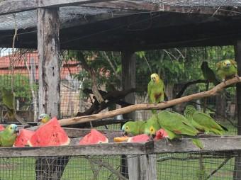 papagaios620x465_soltura_2