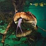 krause-pantanal