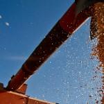 Größtes Feuchtgebiet der Welt durch Anbau von Soja bedroht