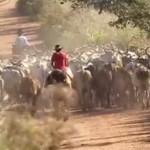 Festival im größten Feuchtgebiet der Welt zeigt Kultur Südamerikas