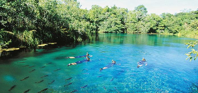 """Atividade de flutuaÁ""""o no Recanto EcolÛgico Rio da Prata. A FlutuaÁ""""o permite nadar na superfÌcie do rio com o auxilio de nadadeiras e observar o fundo atravÈs de uma m·scara e snorkel para respirar. A suave correnteza do rio, leva os visitantes calmamente por um passeio em um mundo subaqu·tico fant·stico, habitado por dezenas de espÈcies de peixes e plantas aqu·ticas. Bonito (MS). Foto: Haroldo Palo Jr"""