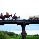 Transpantaneira soll mit Bau von Betonbrücken sicherer werden