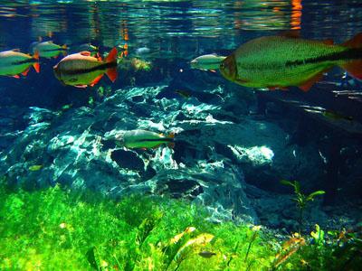 underwater 6