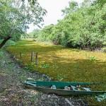 Klimaexperten prognostizieren wüstenähnliche Temperaturen für das Pantanal