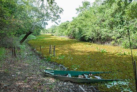 Landschaft Pantanal_0146