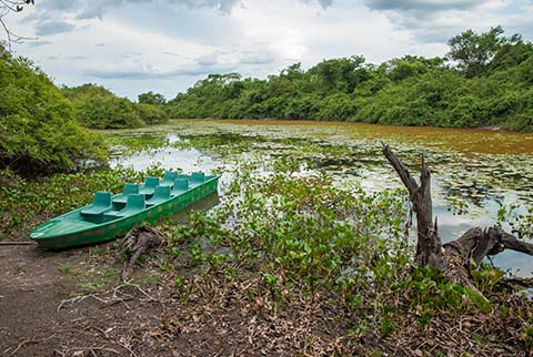 Blick in die Natur des PantanalFoto: sabiá brasilinfo