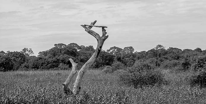 Pantanal Landschaft sw_0063