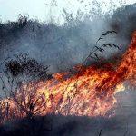"Feuer zerstört 10.000 Hektar im Weltnaturerbe ""Serra do Amolar"""