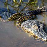 Mit Adoptionen das Pantanal schützen
