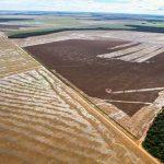 Landwirtschaft im Pantanal: Fluch oder Segen?