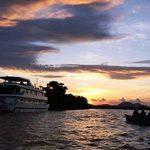 Kreuzfahrten mit Kaiman- und Jaguarbeobachtung