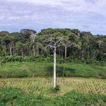 """Atlas des Pantanals"" zeigt fortschreitende Abholzung"