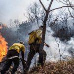 Pantanal-Ausstellung: Dem Feuer auf der Spur