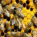 Mit Honig das Pantanal schützen