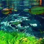 Ausstellung entführt in Unterwasserwelt des Pantanals