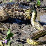 Pantanal beherbergt 5.195 Tier- und 3.911 Pflanzenarten
