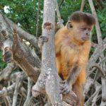 Amerikaner wollen Pantanal für Zoo nachbauen