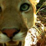 Pantanalforschung: Tier-Selfies für die Wissenschaft