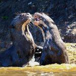 Pantanal will Öko-Tourismus über drei Länder hinweg bieten