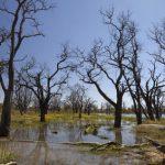 Kahlschläge lassen Pantanal um elf Prozent schrumpfen