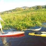 3,5 Meter lange Anaconda begleitet Stand Up Paddler