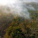 Brände zerstören 647.000 Hektar im Pantanal