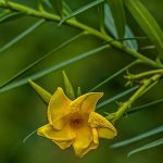 Pantanal erhält erstes Pflanzenlabor zur Erforschung der Artenvielfalt