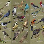 Mit Vogelführer für den Rucksack die Vogelwelt Pantanals bestaunen