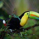 Pantanalstadt Corumbá Hotspot zur Vogelbeobachtung